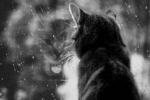 Деликатный тихий дождь