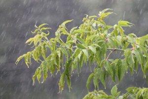 Классификация дождей: сезонные и географические особенности