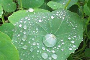 Ваш цвет дождя