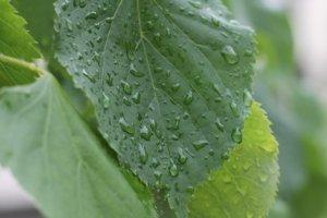 Долгожданное начало дождя