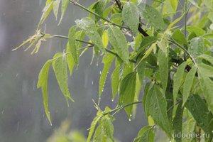 По литературе задали написать сочинение про дождь