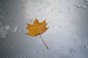 Сочинение про дождь в художественном стиле