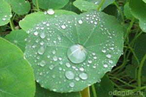 Дождевая вода и её польза