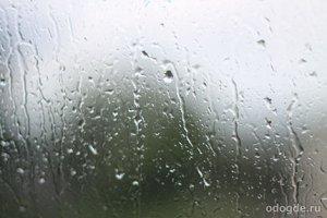 И однажды пролился живой дождь