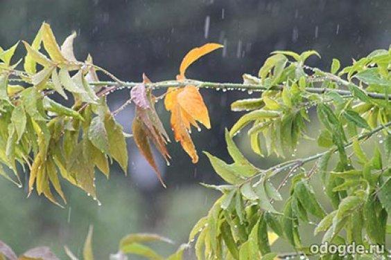 В серых каплях дождя…