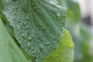 А дождь как лил с небес, так и будет лить