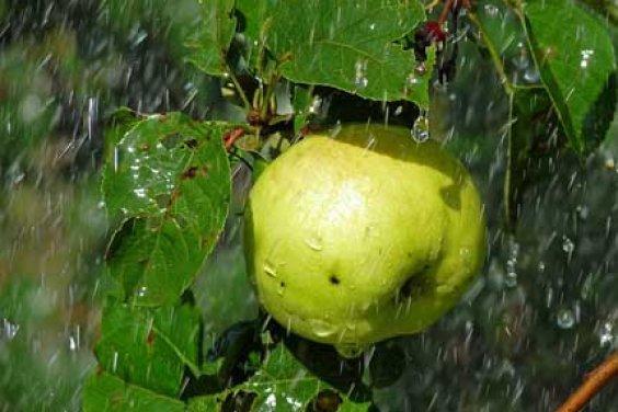 Запах дождя и настроение