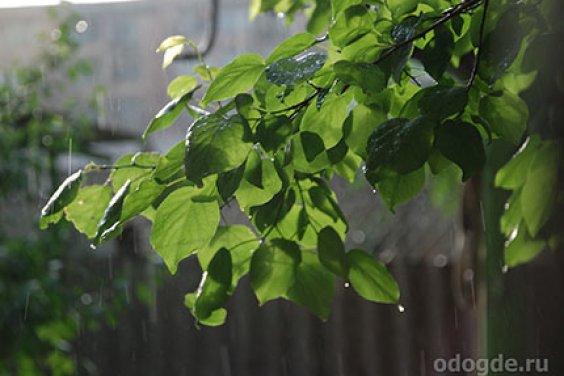 Феерия дождя