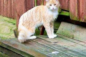 Я кошка под дождём
