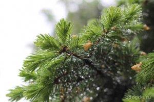 DJ дождь в лесу