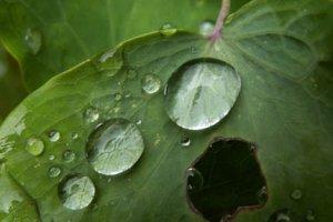 Кислотные дожди – причины и последствия