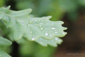 Как дождинка хотела стать дождем