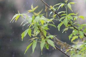 Его миниатюра «Дождь»