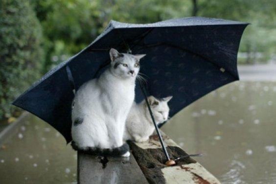Кошка под дождём