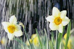Рисунки дождя весной, летом и осенью
