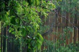 А завтра будет дождь