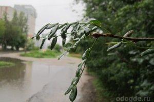 Моросит дождь
