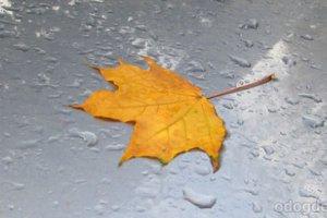Одинокий дождь ищет