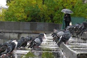 Как птицы предсказывают дождь