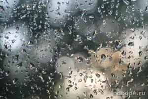 Маленький дождик и его друзья