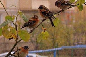 Поющие под дождём птицы