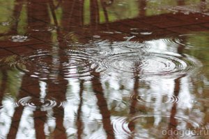 Музыка дождя и как её услышать