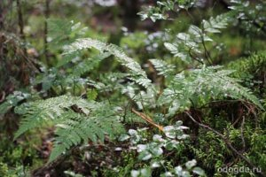Осенний дождь в лесу