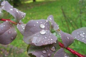 Стихи про дождь разных поэтов