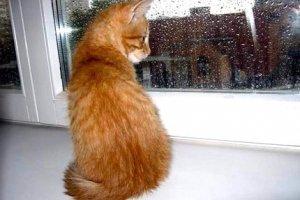 Когда шумит дождь