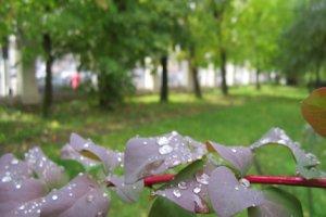 Начался летний дождь