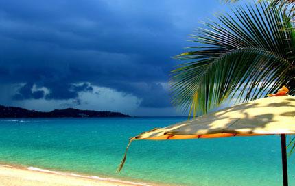 дождь в тропиках в сезон дождей