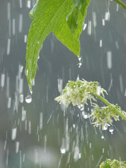 дождь и наши чувства