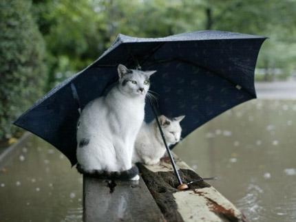 кошка и дождь