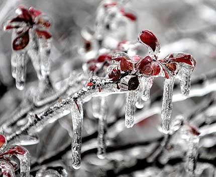 красота ледяного дождя