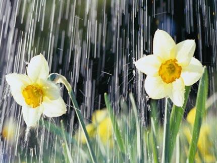 картины и дождь
