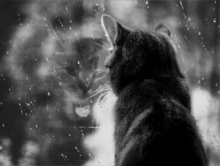 тихий дождь