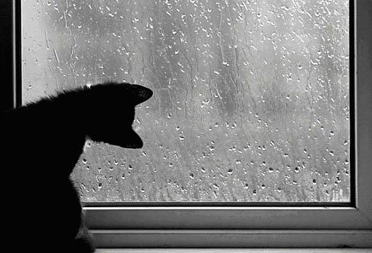 помни о дожде