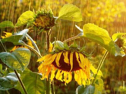 сочинение про дождь