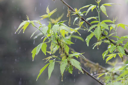 миниатюра Дождь