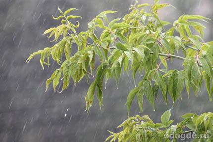 за окнами дождь