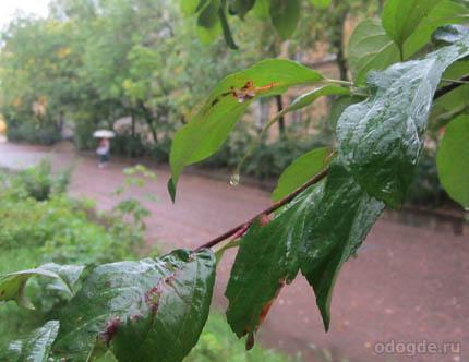 Дождь в дорогу