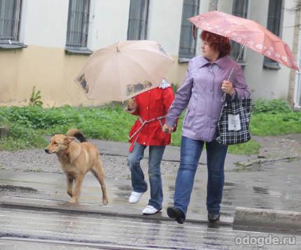 Пес промок под дождём