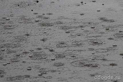 Дождь всегда бескорыстен