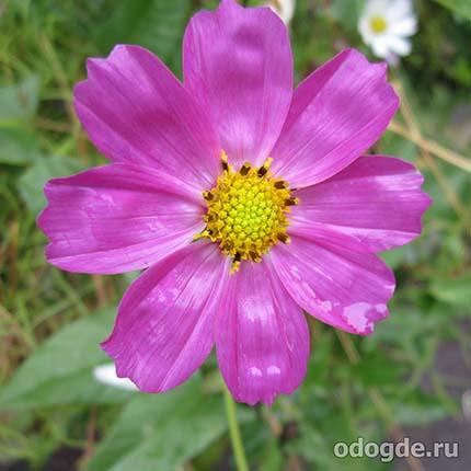 цветы под летним дождем