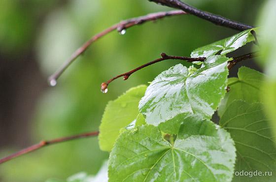 капелька дождя