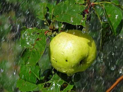 свежесть дождя