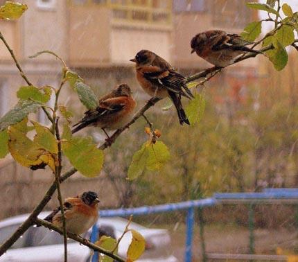 птицы и дождь