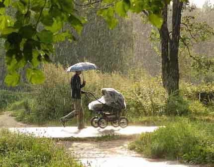 Грибной дождь дождь и интересное о