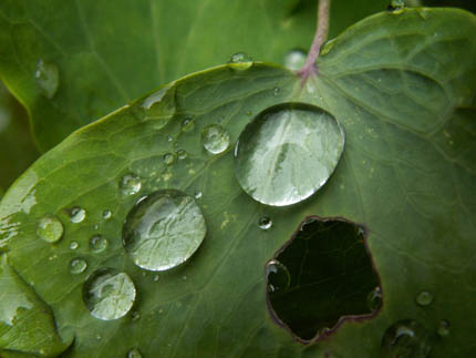 последствия кислотного дождя