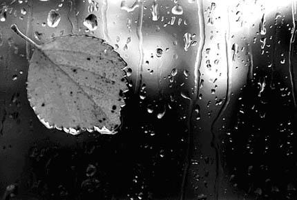 лист под дождем